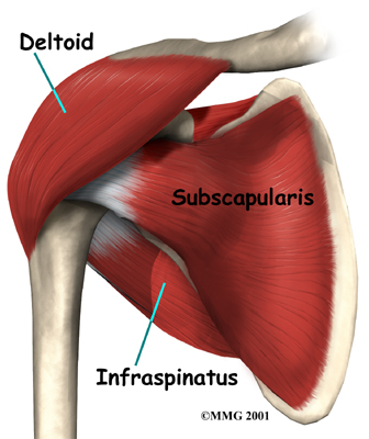 Deltoid Injury