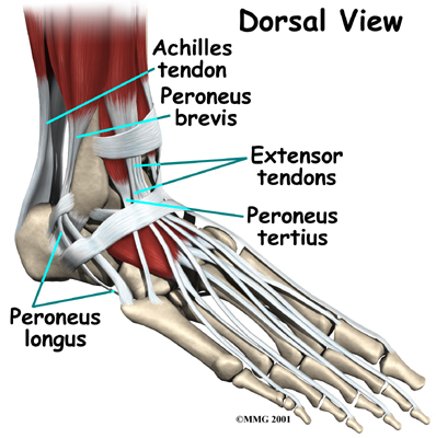 Physiotherapy in Barrie for Osteoarthritis of the Ankle