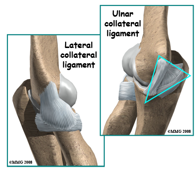 Ligaments are soft tissue